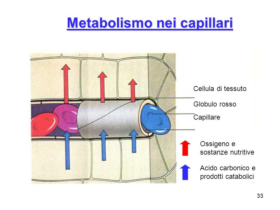 Metabolismo nei capillari