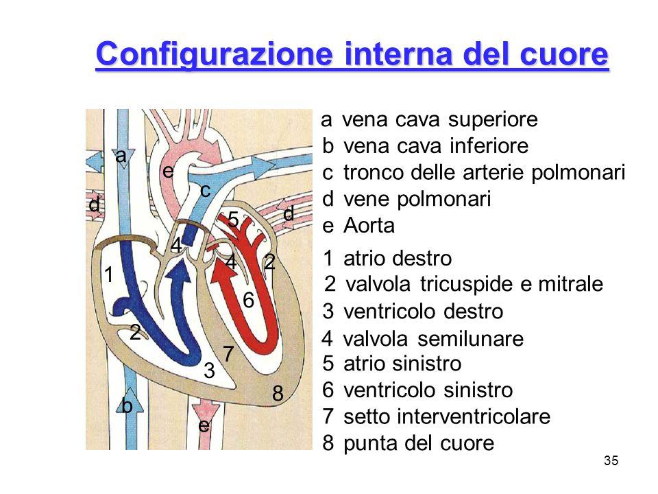 Configurazione interna del cuore