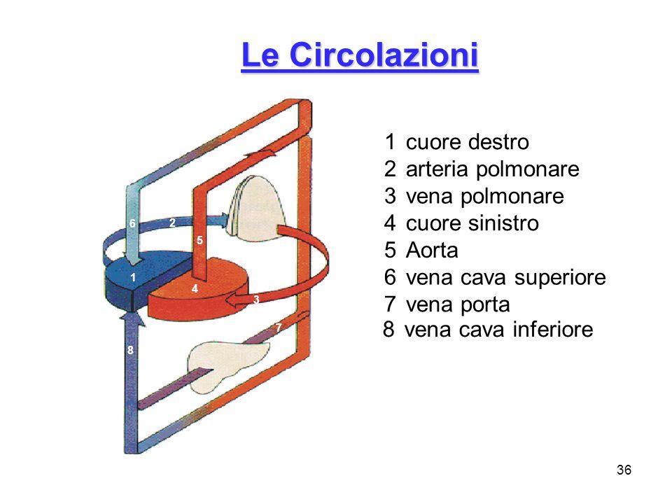 Le Circolazioni 1 cuore destro 2 arteria polmonare 3 vena polmonare
