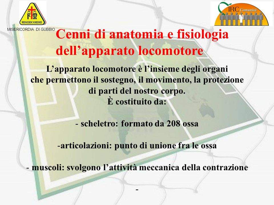 Cenni di anatomia e fisiologia dell'apparato locomotore