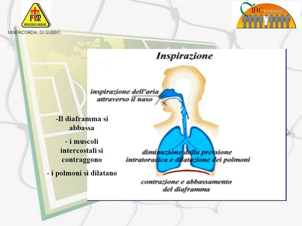 Il diaframma si abbassa i muscoli intercostali si contraggono