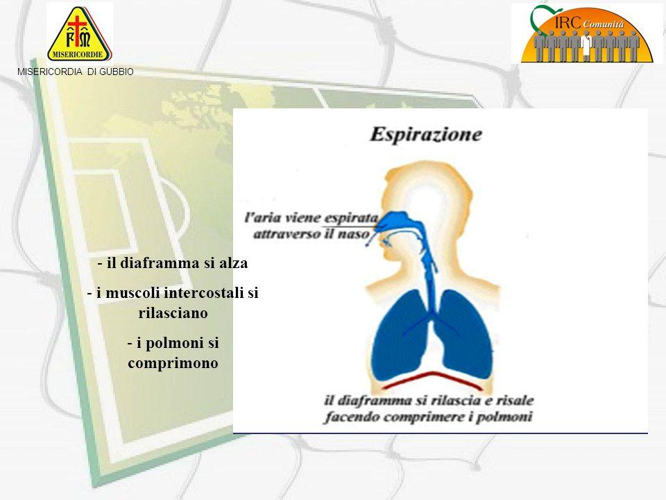 i muscoli intercostali si rilasciano i polmoni si comprimono
