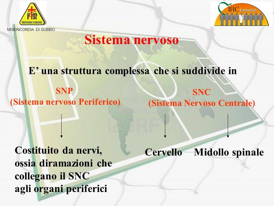 (Sistema nervoso Periferico) SNC (Sistema Nervoso Centrale)