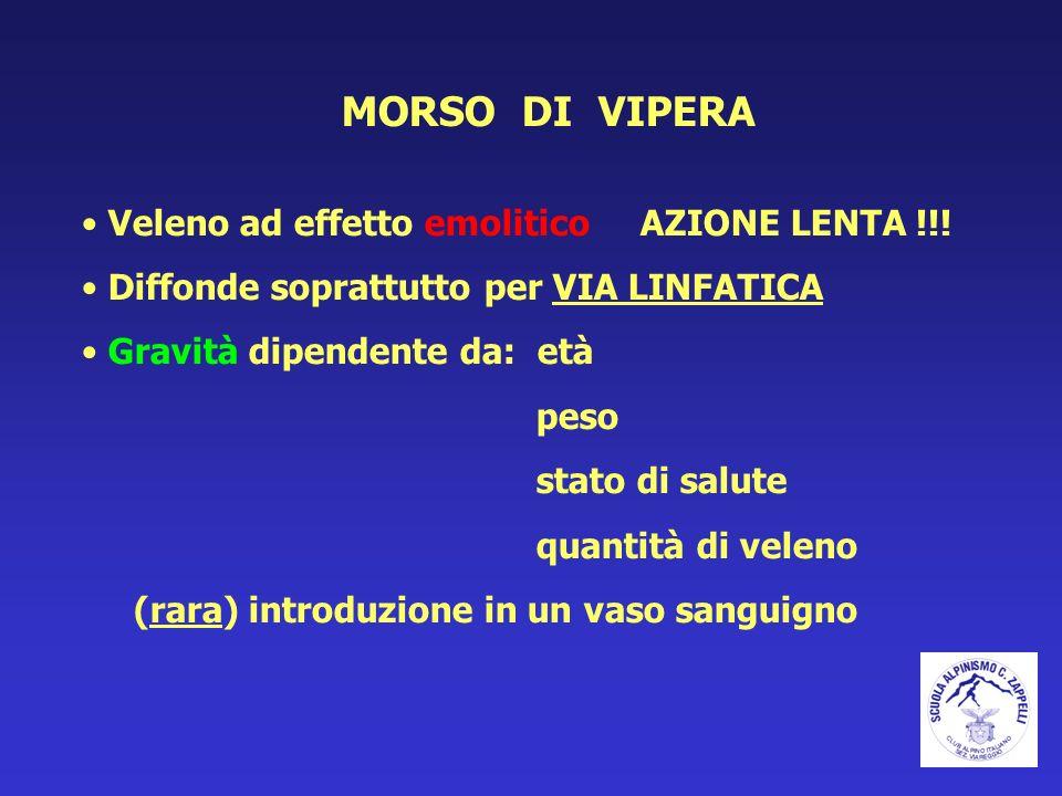 MORSO DI VIPERA Veleno ad effetto emolitico AZIONE LENTA !!!