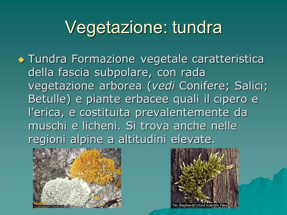 Vegetazione: tundra