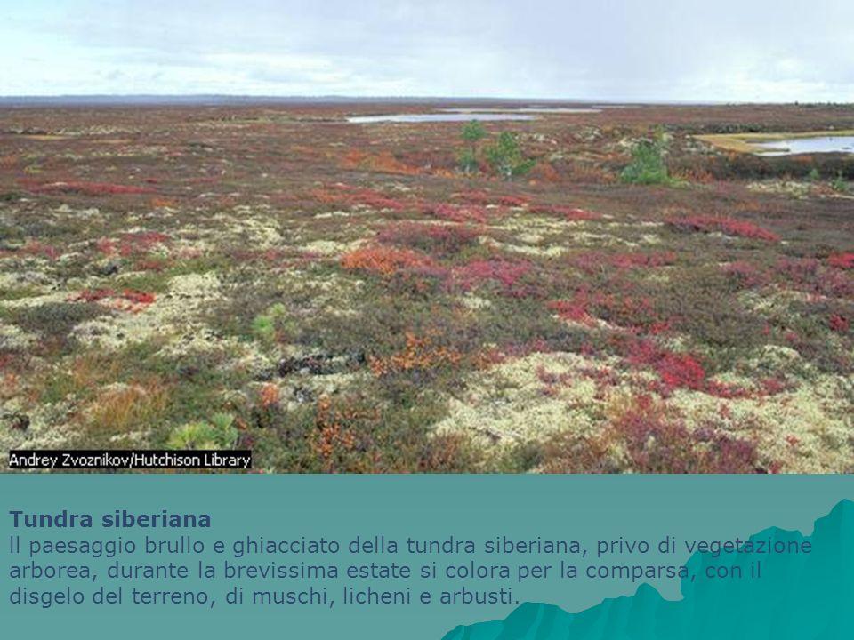 Tundra siberiana