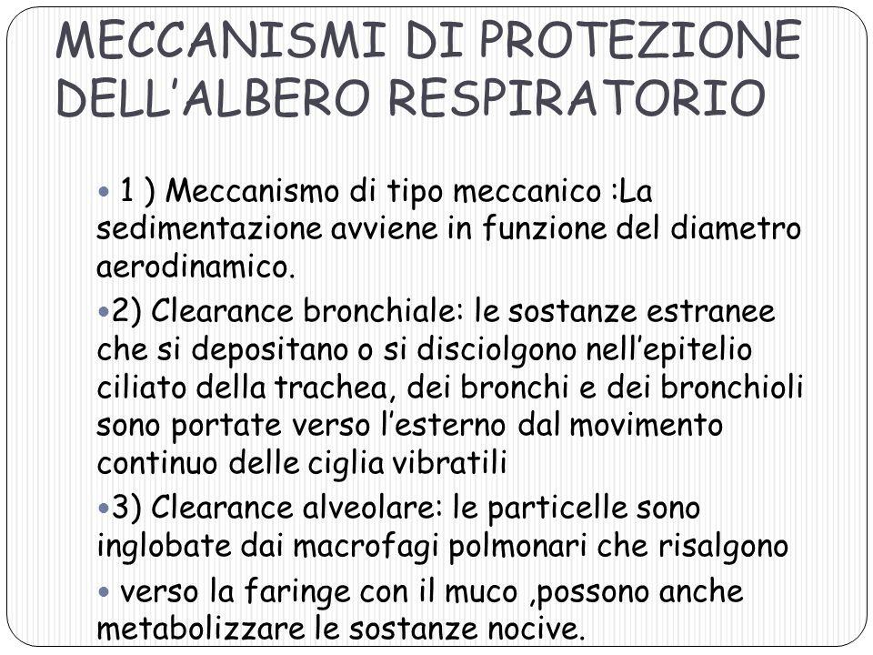 MECCANISMI DI PROTEZIONE DELL'ALBERO RESPIRATORIO