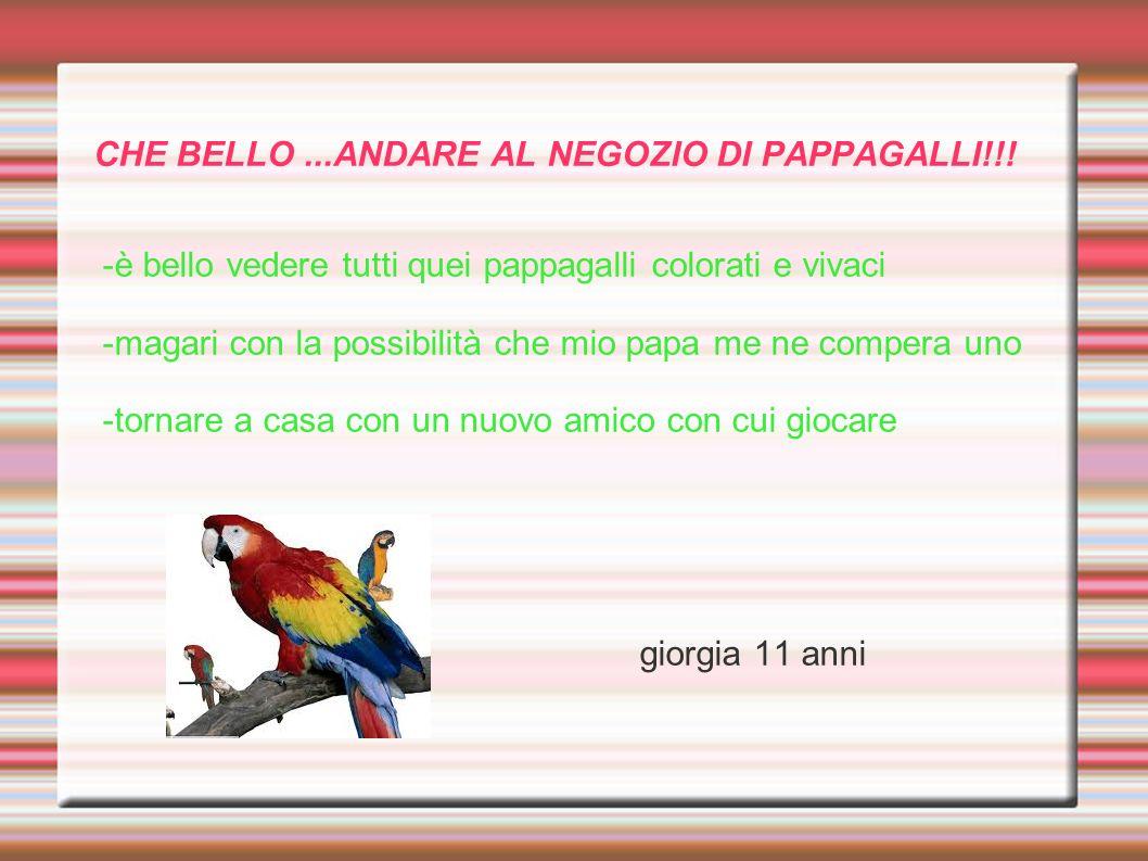 CHE BELLO ...ANDARE AL NEGOZIO DI PAPPAGALLI!!!