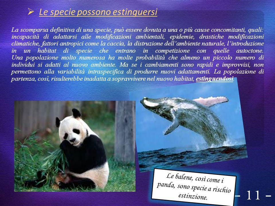 Le balene, così come i panda, sono specie a rischio estinzione.