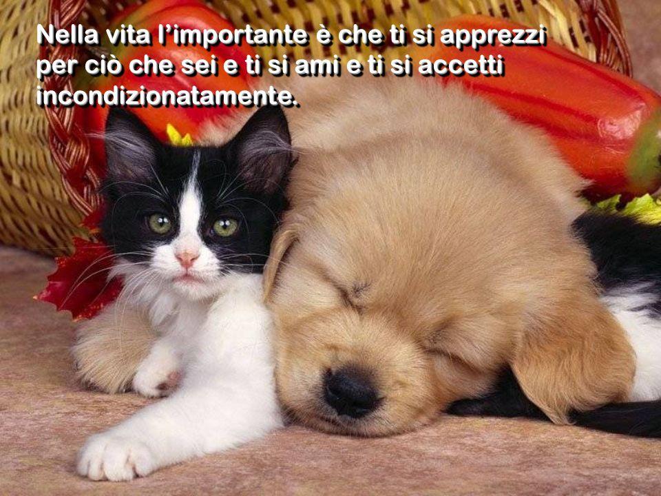Nella vita l'importante è che ti si apprezzi per ciò che sei e ti si ami e ti si accetti incondizionatamente.