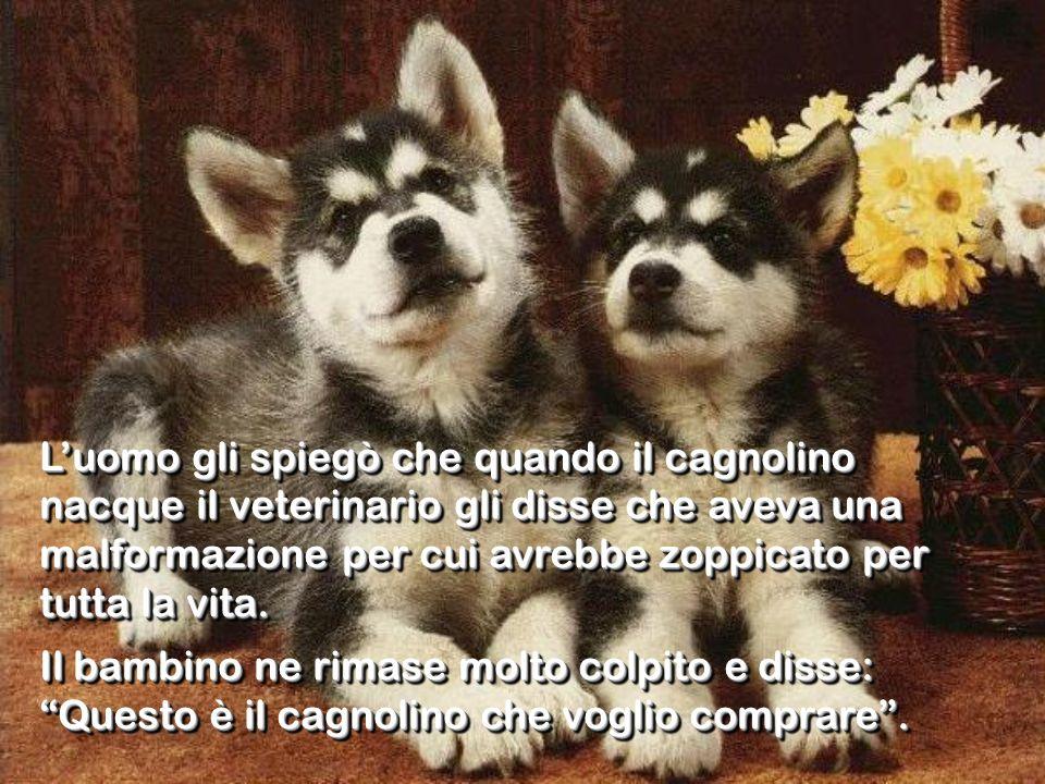 L'uomo gli spiegò che quando il cagnolino nacque il veterinario gli disse che aveva una malformazione per cui avrebbe zoppicato per tutta la vita.