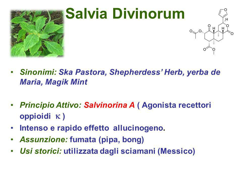 Salvia Divinorum Sinonimi: Ska Pastora, Shepherdess' Herb, yerba de Maria, Magik Mint.