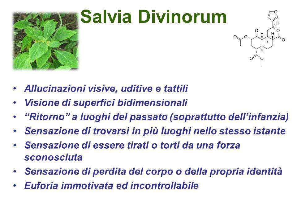 Salvia Divinorum Allucinazioni visive, uditive e tattili