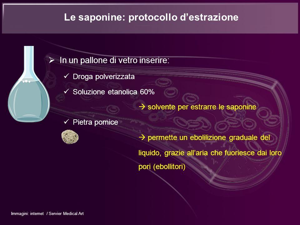 Le saponine: protocollo d'estrazione