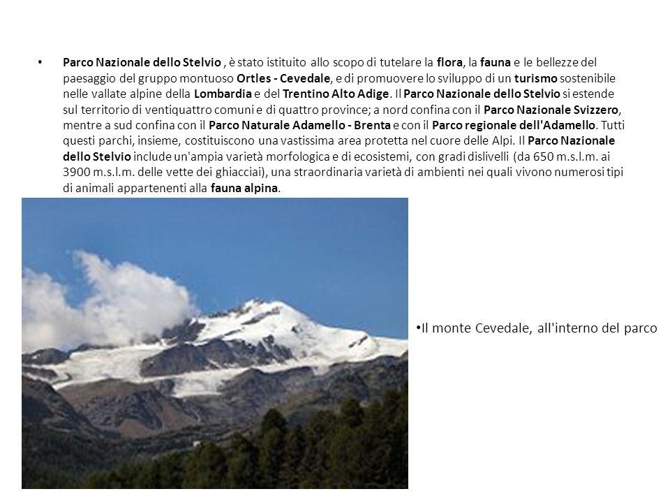 Il monte Cevedale, all interno del parco