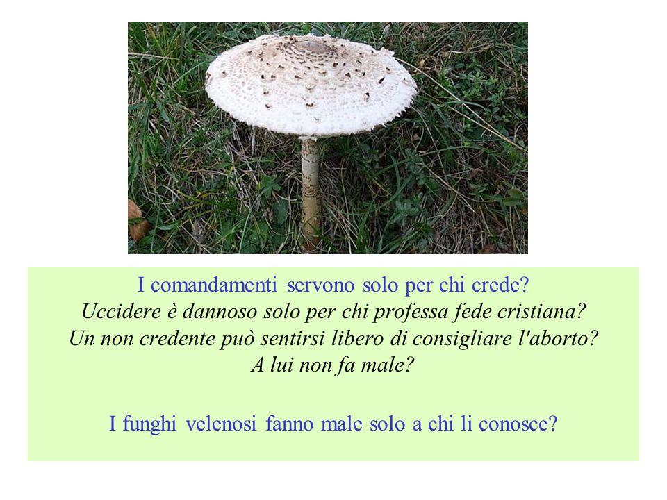 I funghi velenosi fanno male solo a chi li conosce