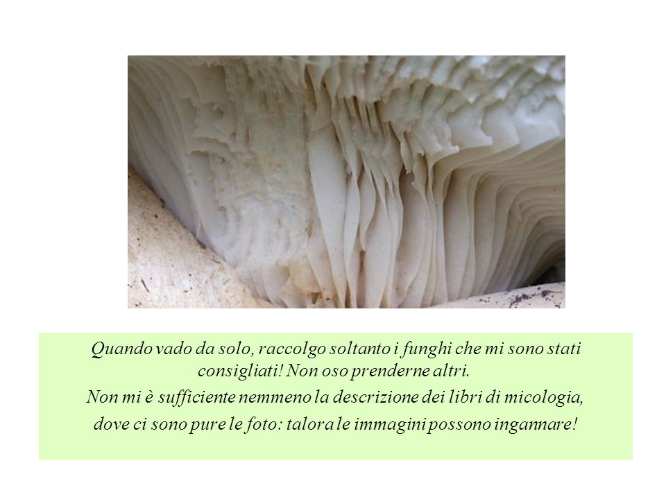 Non mi è sufficiente nemmeno la descrizione dei libri di micologia,