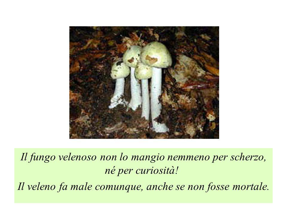 Il fungo velenoso non lo mangio nemmeno per scherzo, né per curiosità!