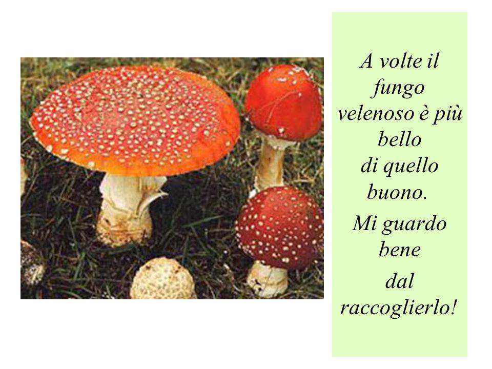 A volte il fungo velenoso è più bello di quello buono.