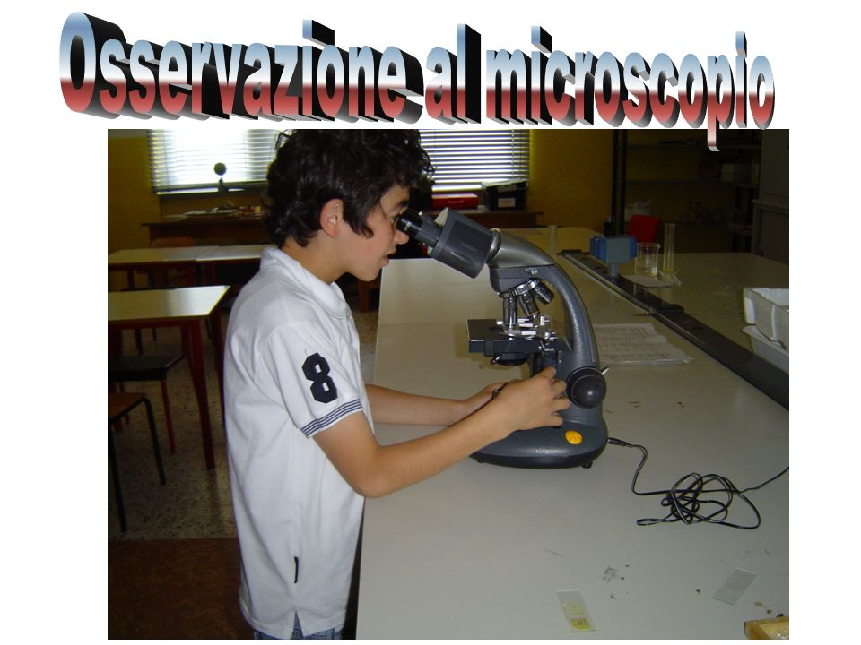 Osservazione al microscopio