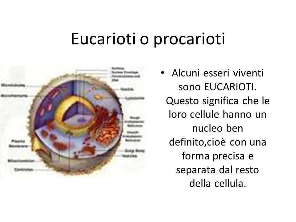 Eucarioti o procarioti