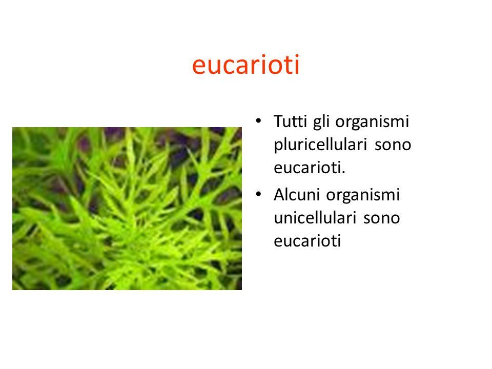 eucarioti Tutti gli organismi pluricellulari sono eucarioti.