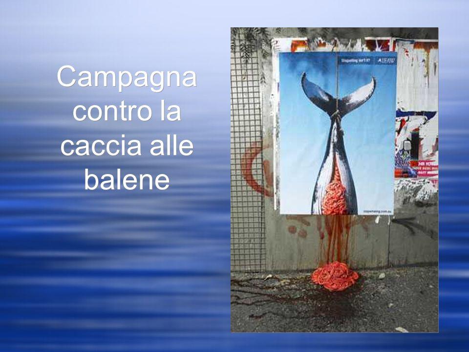 Campagna contro la caccia alle balene