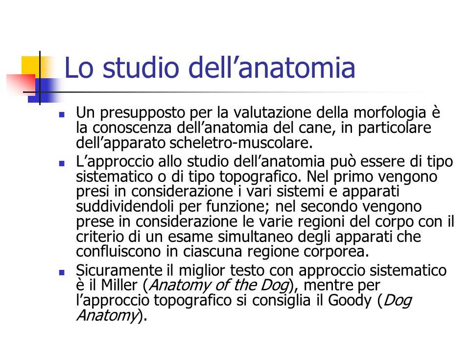 Lo studio dell'anatomia