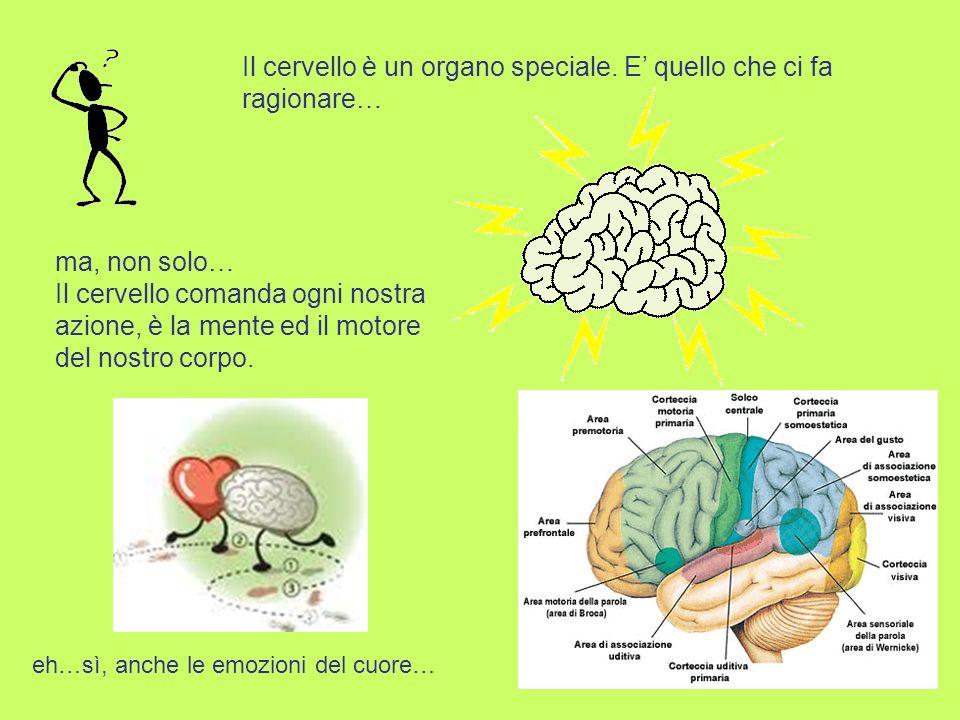 Il cervello è un organo speciale. E' quello che ci fa ragionare…