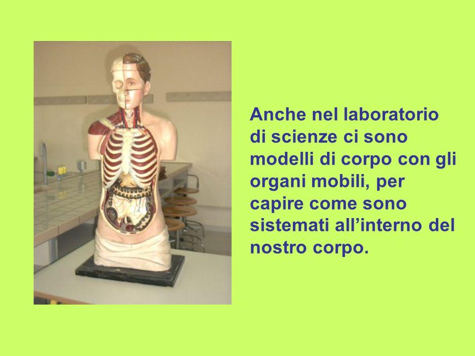 Anche nel laboratorio di scienze ci sono modelli di corpo con gli organi mobili, per capire come sono sistemati all'interno del nostro corpo.