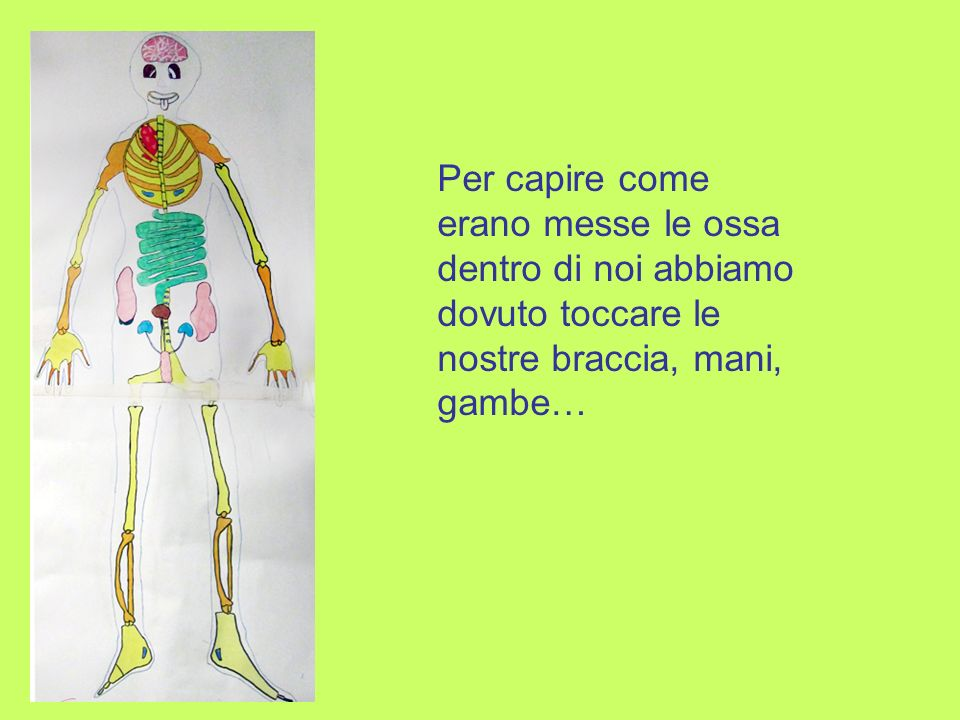 Per capire come erano messe le ossa dentro di noi abbiamo dovuto toccare le nostre braccia, mani, gambe…