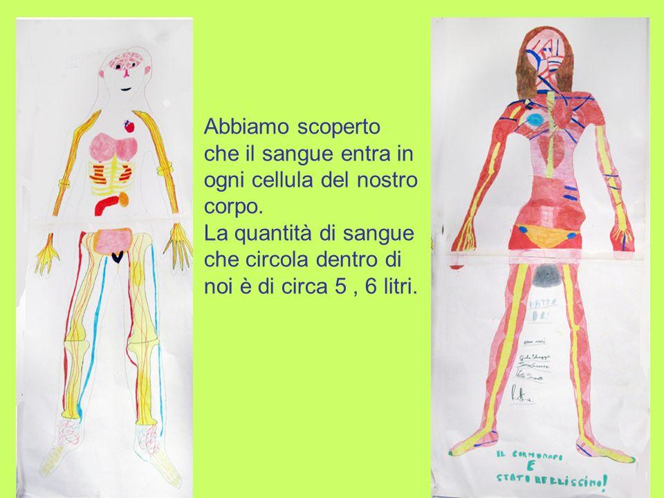 Abbiamo scoperto che il sangue entra in ogni cellula del nostro corpo.