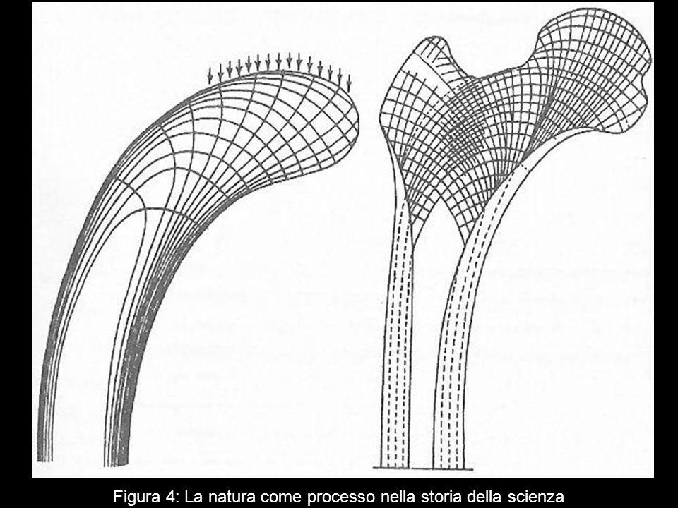 Figura 4: La natura come processo nella storia della scienza