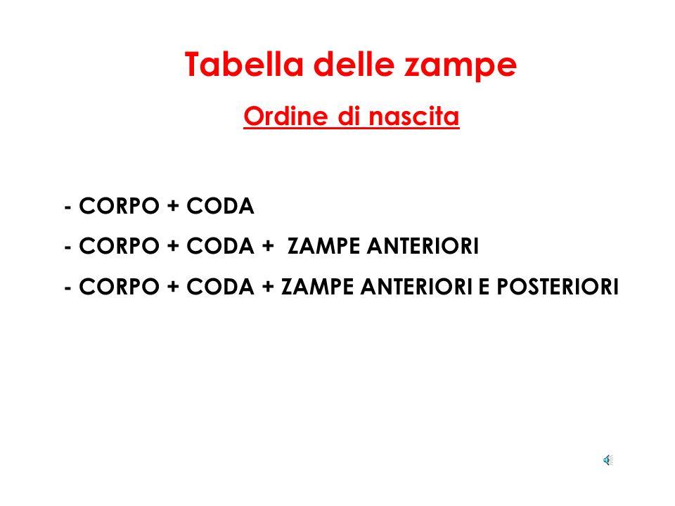 Tabella delle zampe Ordine di nascita - CORPO + CODA