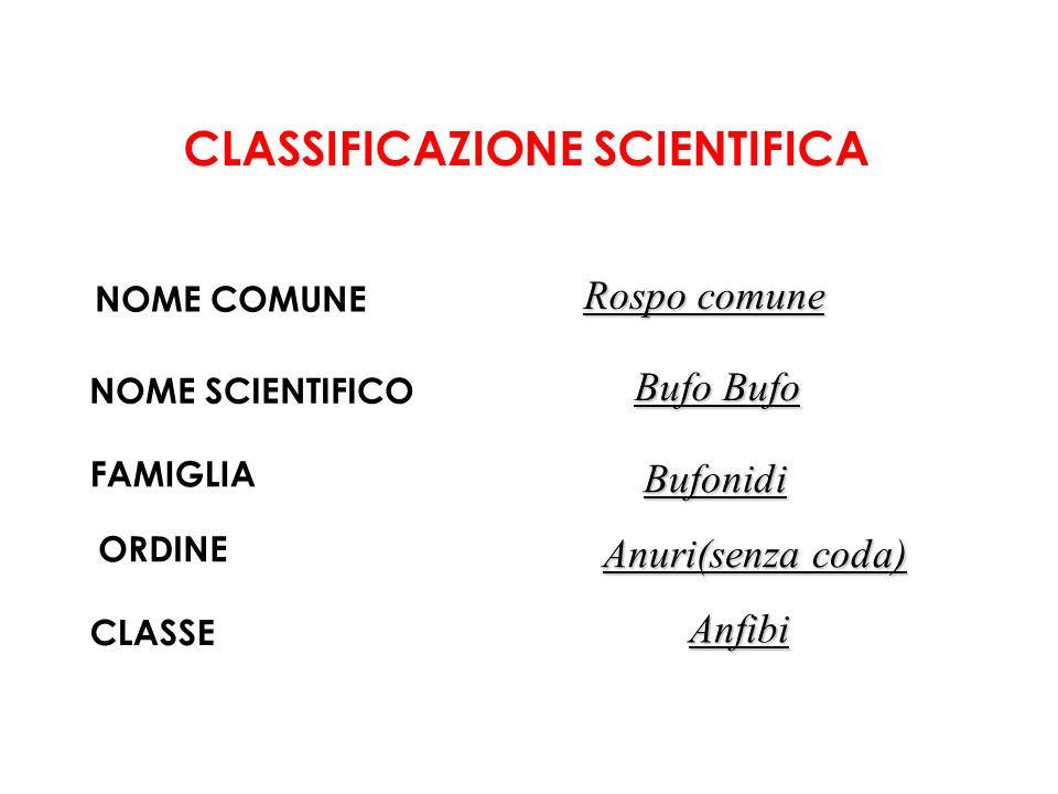 CLASSIFICAZIONE SCIENTIFICA