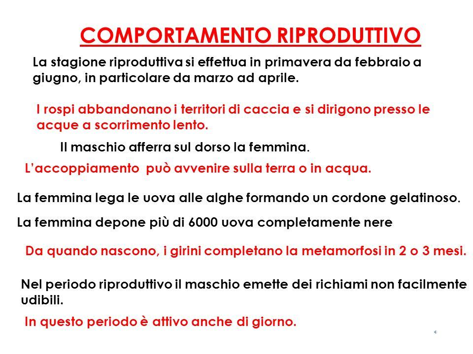 COMPORTAMENTO RIPRODUTTIVO