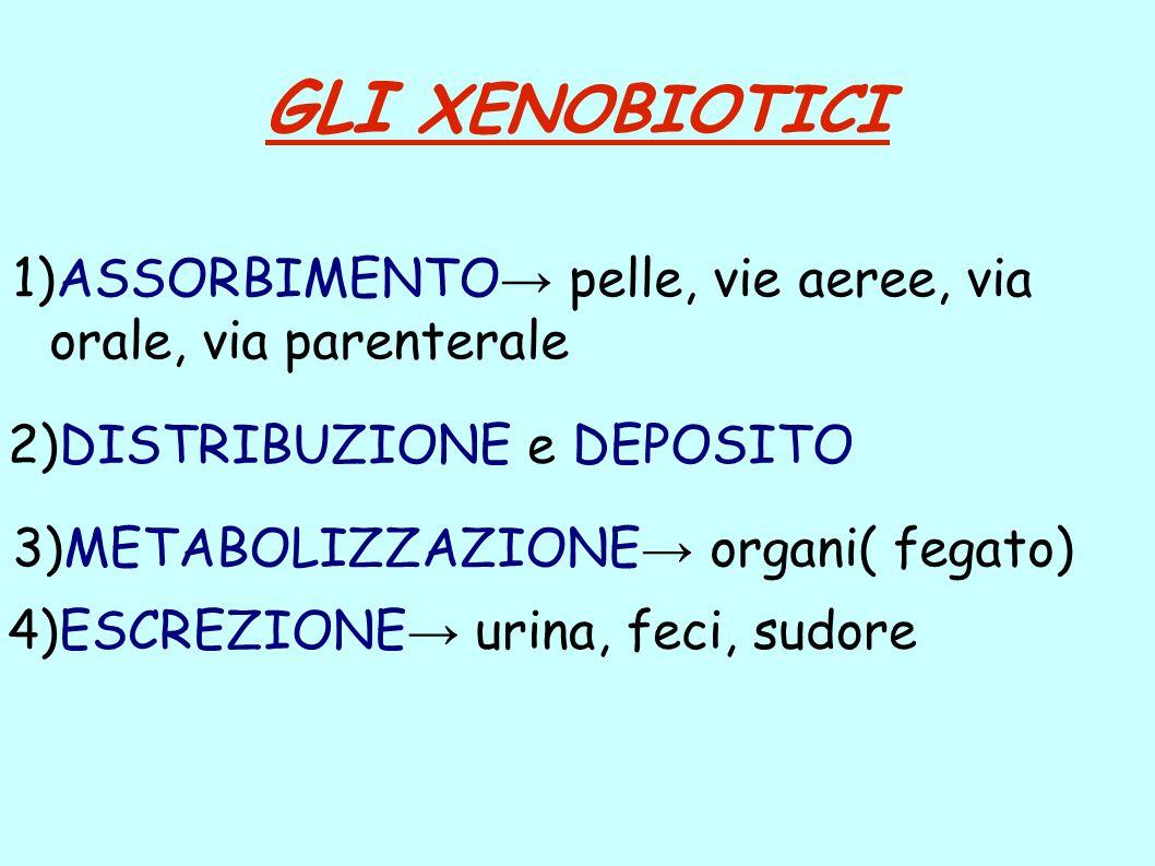 GLI XENOBIOTICI 1)ASSORBIMENTO→ pelle, vie aeree, via orale, via parenterale. 2)DISTRIBUZIONE e DEPOSITO.