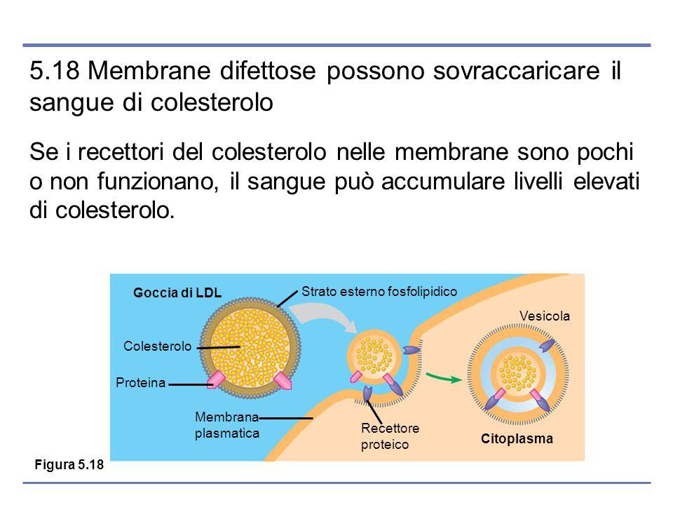 5.18 Membrane difettose possono sovraccaricare il sangue di colesterolo