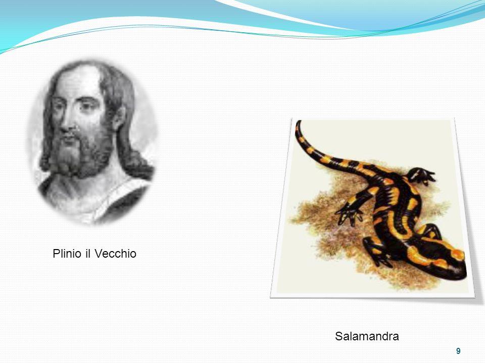 Plinio il Vecchio Salamandra