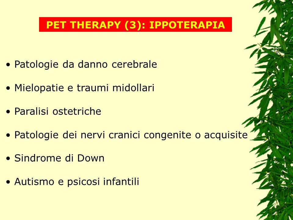 PET THERAPY (3): IPPOTERAPIA