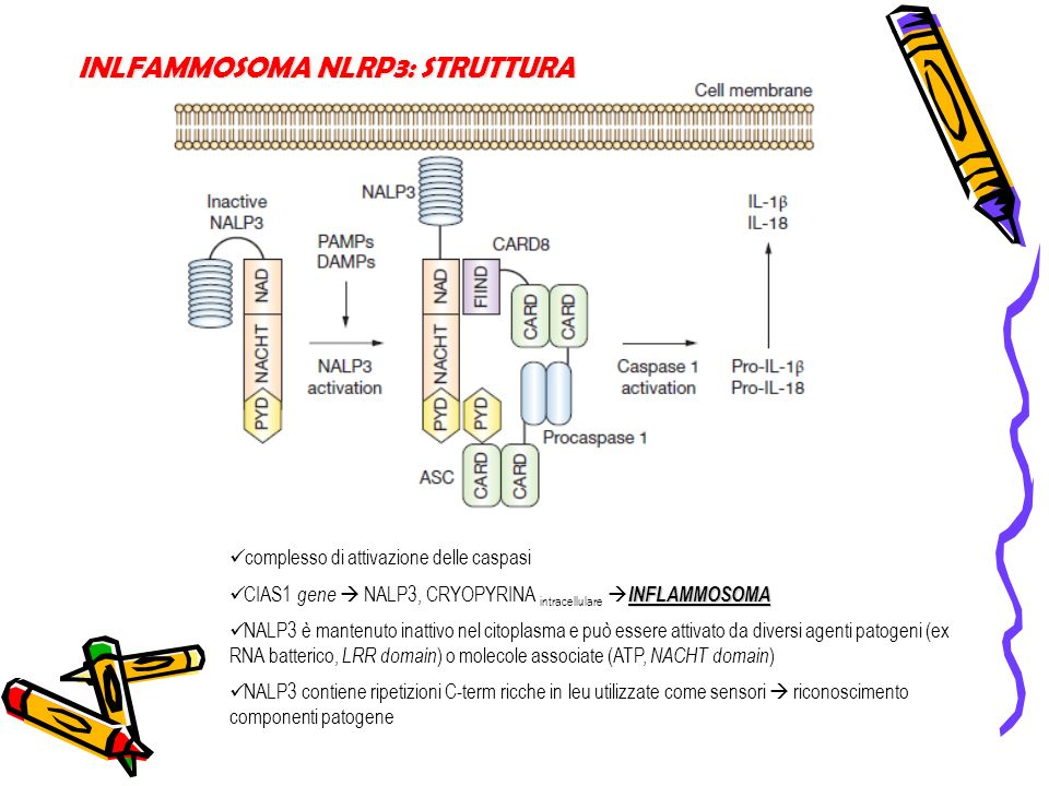 INLFAMMOSOMA NLRP3: STRUTTURA