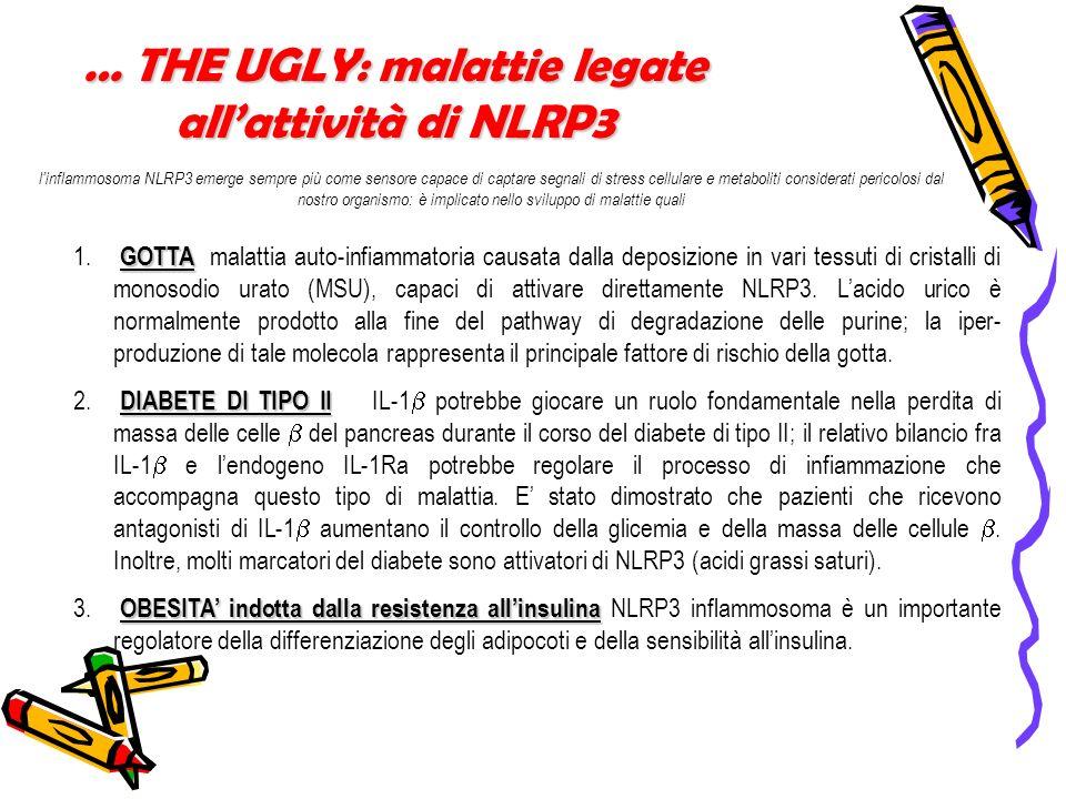 … THE UGLY: malattie legate all'attività di NLRP3