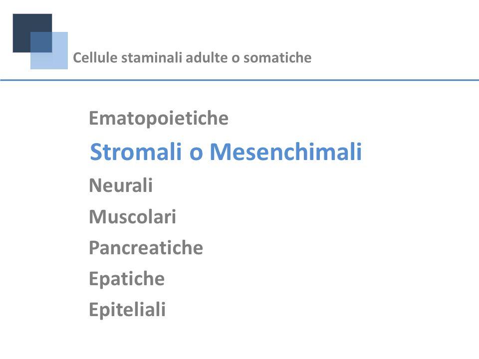 Stromali o Mesenchimali