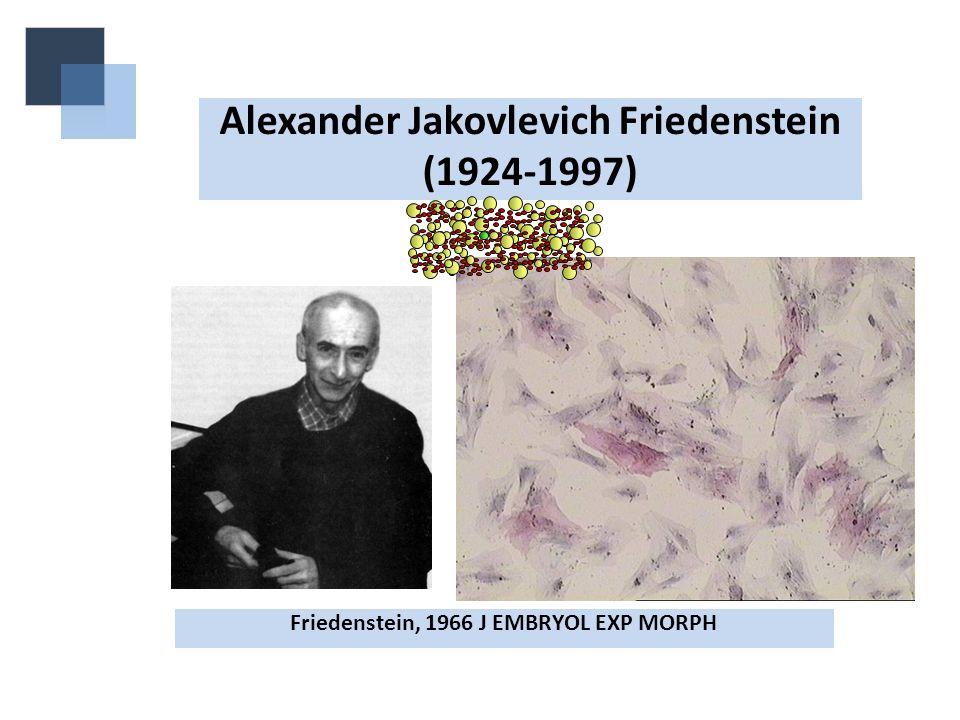 Alexander Jakovlevich Friedenstein (1924-1997)