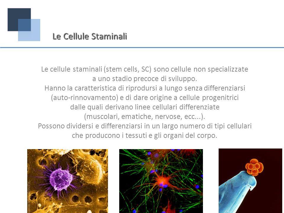 Le Cellule Staminali Le cellule staminali (stem cells, SC) sono cellule non specializzate. a uno stadio precoce di sviluppo.