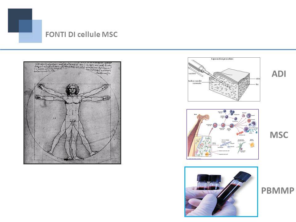 FONTI DI cellule MSC ADI MSC PBMMP