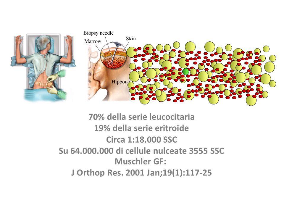 70% della serie leucocitaria 19% della serie eritroide