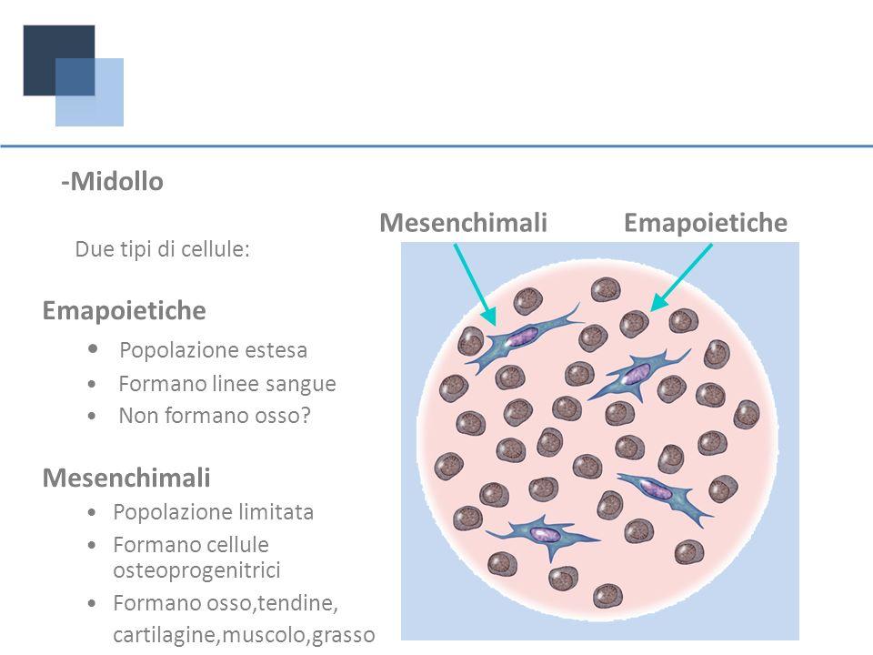 -Midollo Due tipi di cellule: Emapoietiche Popolazione estesa