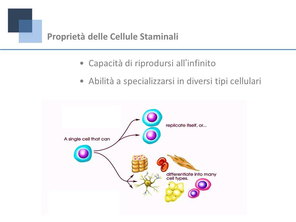 Proprietà delle Cellule Staminali