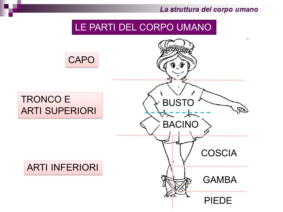 Top LE PARTI DEL CORPO UMANO - ppt video online scaricare AZ91